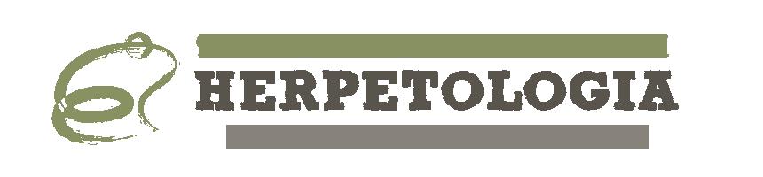 https://www.amphibians.org/wp-content/uploads/2019/04/sapo-en-1.png