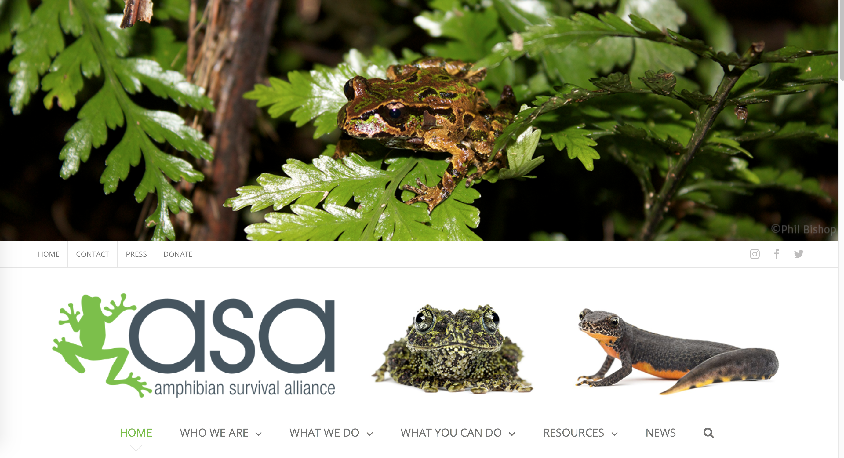 https://www.amphibians.org/wp-content/uploads/2019/05/Screen-Shot-2019-05-09-at-10.11.40-AM.png